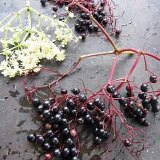 Mürverli Karışık Meyveli Komposto